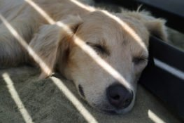dog laying under shade