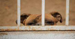 a dog inside a cage
