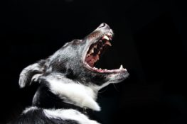 Dog Bite and Attack Injuries